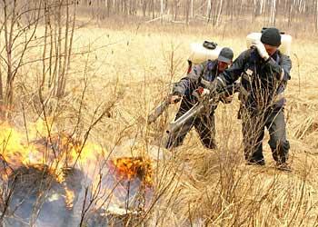 Круглосуточный противопожарный пост создали в Воскресеновском заказнике