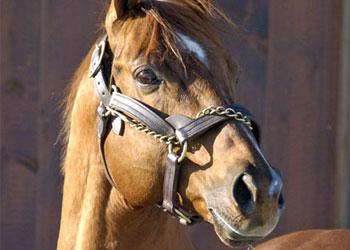 В Приамурье запретили кататься на лошадях по улицам и площадям