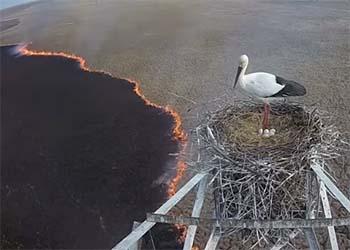 Камера в гнезде аиста сняла распространение пожара возле Тамбовки