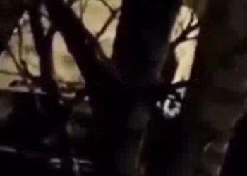 Благовещенцы засняли ночью «мстителя»