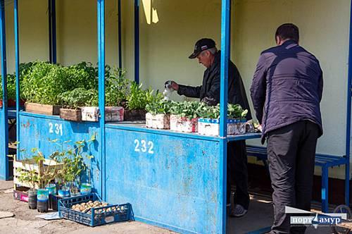 Рассаду клубники и помидоров начали продавать в Благовещенске