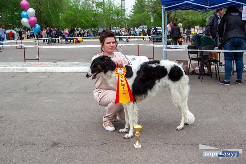 Мопс Хуч стал лучшей собакой на «Амур дог шоу»