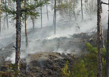 Все природные пожары потушили в Приамурье