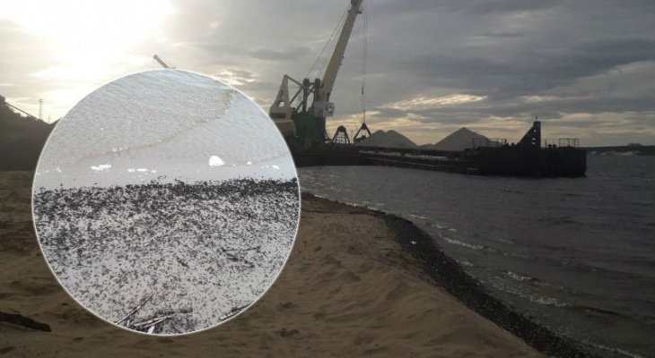 Биолог дал объяснение многочисленным мухам на берегу Волги