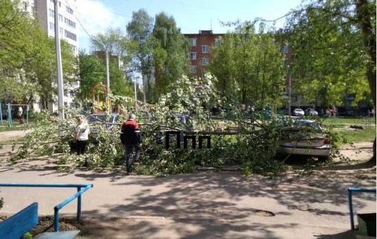 В Чувашии сильный ветер повалил деревья на дороги