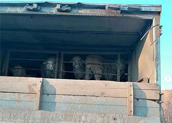 В Приамурье не пустили около 700 «животных-нелегалов»