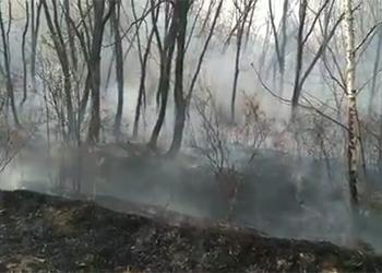 В окрестностях Благовещенска почти сутки тушили природный пожар