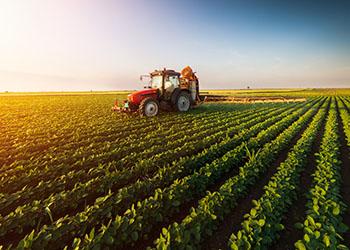 Три фермера из Приамурья придумали, как без затрат увеличить урожайность
