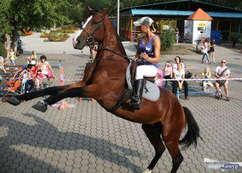 Благовещенских предпринимателей начали наказывать за катание на лошадях по набережной