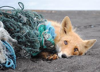 Более тридцати амурских озер очистят от сетей, брошенных рыбаками