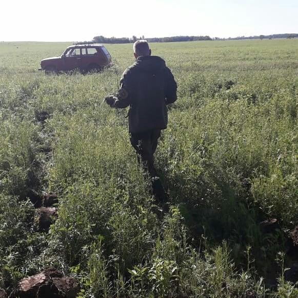 Еще 250 сосен высадили в Березовском заказнике