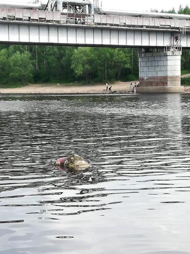 В Тынде дети купаются в речке рядом с тушей мертвого животного