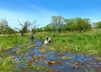 В Архаринском районе после спада воды в двух озерах гибнет рыба