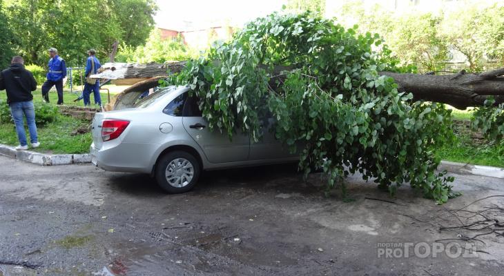 Старое дерево раздавило две