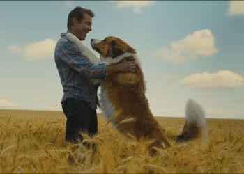 «Собачья жизнь 2», «Та еще парочка» и «Курск»