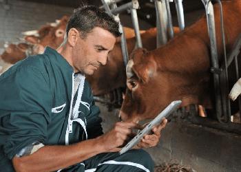 Ветеринаров в районы Приамурья будут привлекать подъемными