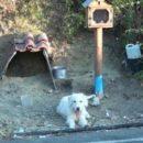 Преданный пес полтора года просидел на месте гибели хозяина
