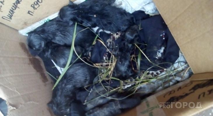 В Чебоксарах новорожденных щенят выбросили на помойку