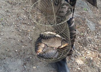 У рыбака в Благовещенске изъяли 47 кило карасей