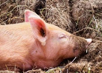 В Приамурье создали отряды «быстрого реагирования» из ветеринаров