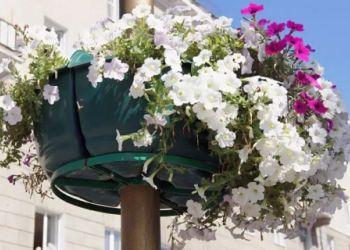 Улицы Благовещенска украсили вертикальные цветники