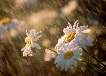 Из-за дождя в Благовещенске перенесли фестиваль ко Дню любви, семьи и верности