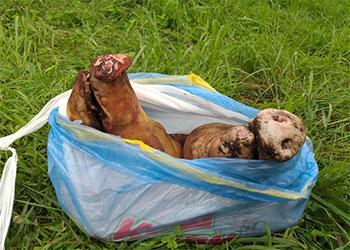 Под покровом ночи амурчанин пытался вывезти мясо из карантинной зоны в селе Ровное