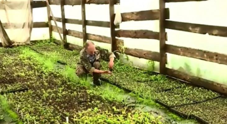 Фермер из Канашского района выращивает нетипичные для республики фрукты