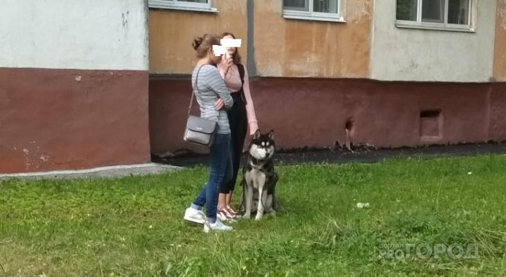 В Новочебоксарске собака на глазах своей хозяйки загрызла кошку
