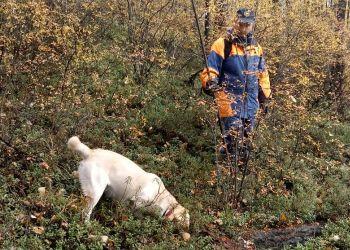 Волонтеры нашли в лесу куртку пропавшей пенсионерки из Шимановска