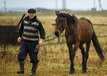 Свою лошадь амурчанину пришлось возвращать через суд и приставов