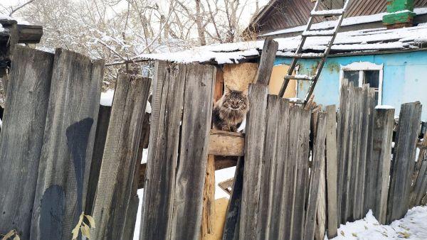 Семеро на чердаке: благовещенцы пытаются спасти котов из-под крыши старого дома