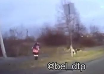 Спасаясь от бродячих собак, школьница едва не угодила под машину в Белогорске