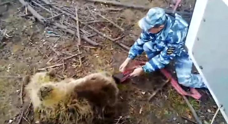 Полицейские выпустили косолапого на волю: «Пока, медвежонок»