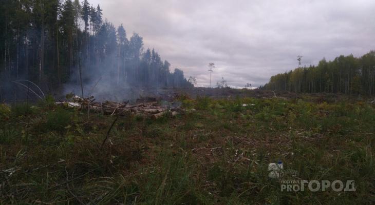 Тайную вырубку леса в Чувашии оценили в 1,5 миллиона рублей