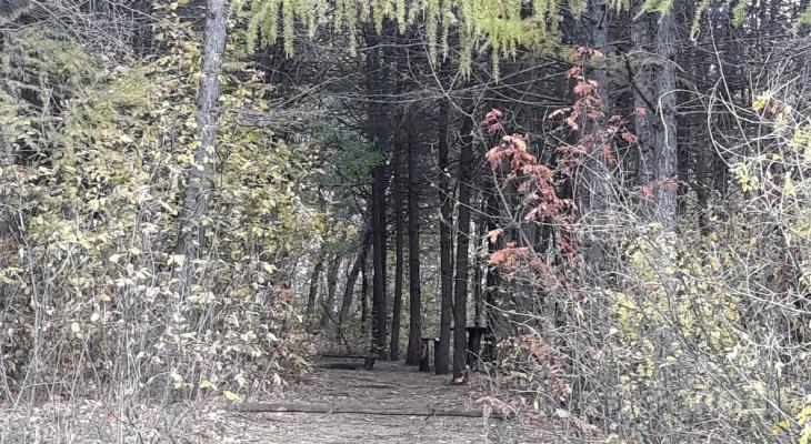 Неопознанное тело мужчины нашли в лесном массиве Чебоксар