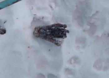 Рука или лапа: на севере Приамурья выясняют обстоятельства жуткой находки