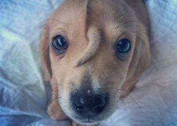 Волонтеры обнаружили «щенка-единорога»