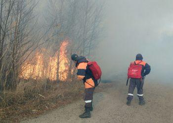 Лесных пожарных начнут готовить в Приамурье