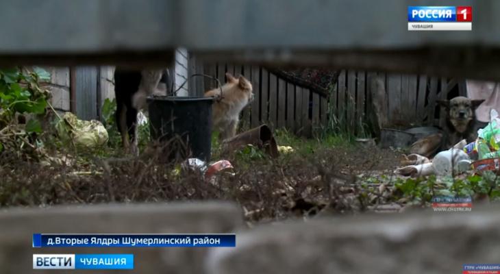 Свора собак дерет овец и держит жителей чувашской деревни в страхе
