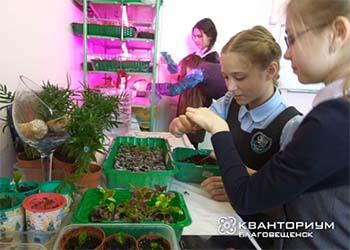 Амурские школьники будут выращивать квадратные арбузы