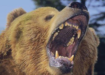 Медведь-шатун залез в дом и загрыз россиянина