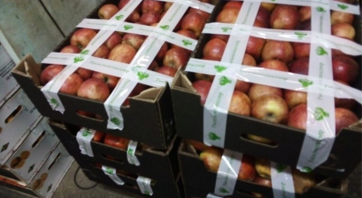 141 килограмм нелегальных яблок нашли и уничтожили в Чувашии